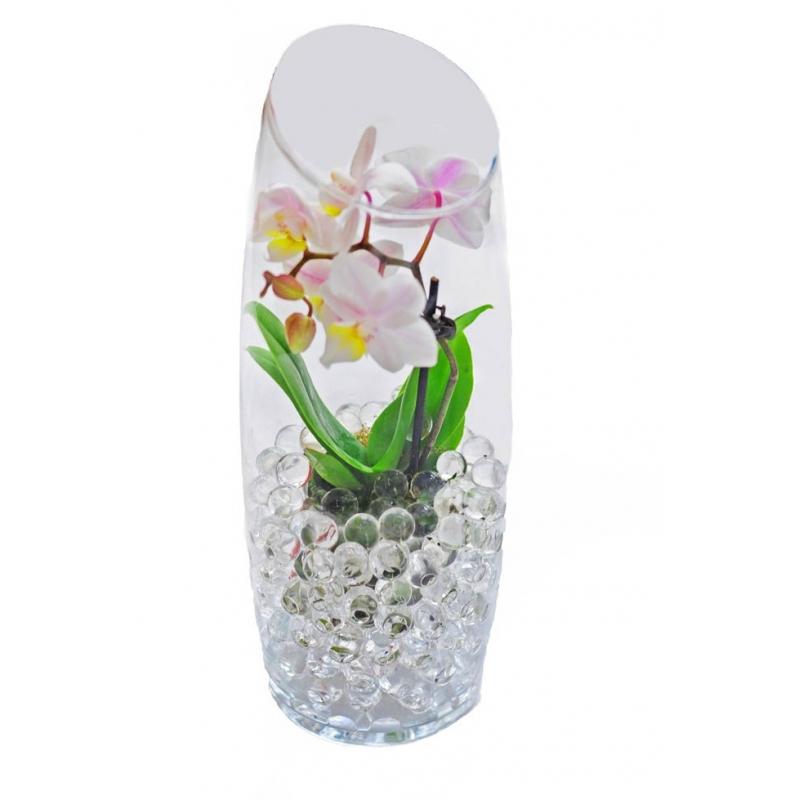 Petit Orchidée Corfu